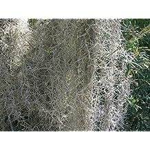 DierCosy 13 Millimetre x 27.5 Metre Stemtex Stem Flower Tape Moss 1 Roll
